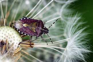 Putukas